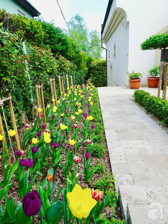Ngôi nhà với khu vườn 600m² phủ kín các loại hoa đẹp như tranh vẽ của nữ giám đốc Việt ở Hungary - Hình 27