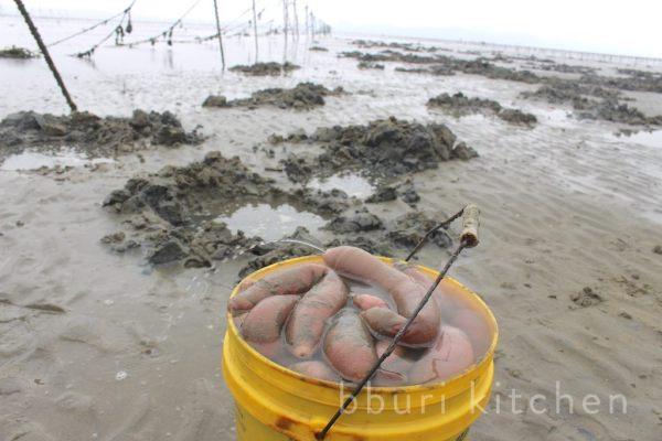 Cá dương vật, món ăn khiến người dân Hàn Quốc tranh nhau mua quanh năm - Hình 2