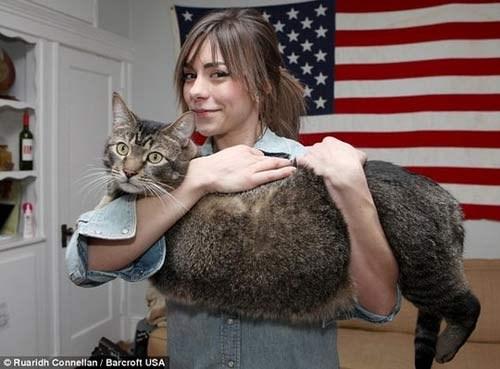 Tận mắt xem những chú mèo khổng lồ - Hình 7