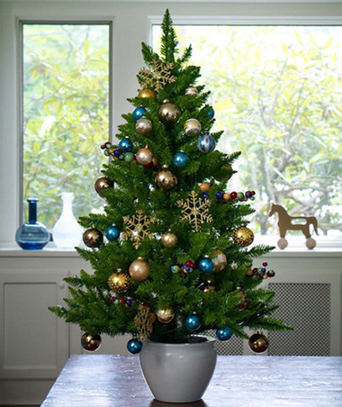 Chọn cây thông trang trí đón mừng Giáng sinh - Hình 3