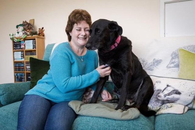 Chú chó có giác quan thứ sáu tìm cách cảnh báo chủ nhân về bệnh ung thư