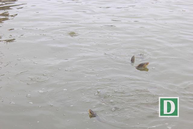 Hàng vạn người dự Lễ phóng sinh, hơn 5 tấn cá được thả xuống sông Hồng - Hình 20