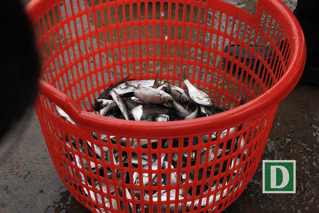 Hàng vạn người dự Lễ phóng sinh, hơn 5 tấn cá được thả xuống sông Hồng - Hình 14