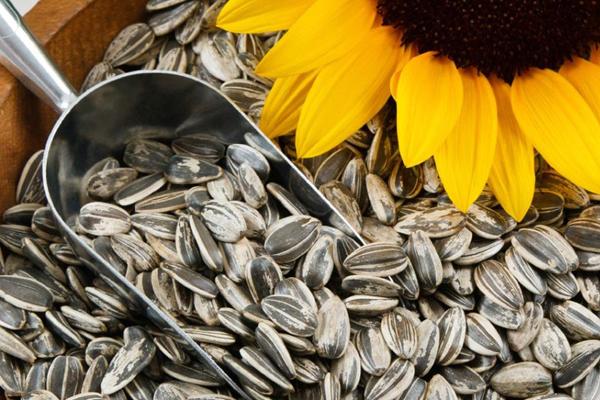 8 loại hạt vừa ăn vặt vui miệng vừa hỗ trợ giảm cân - Hình 3