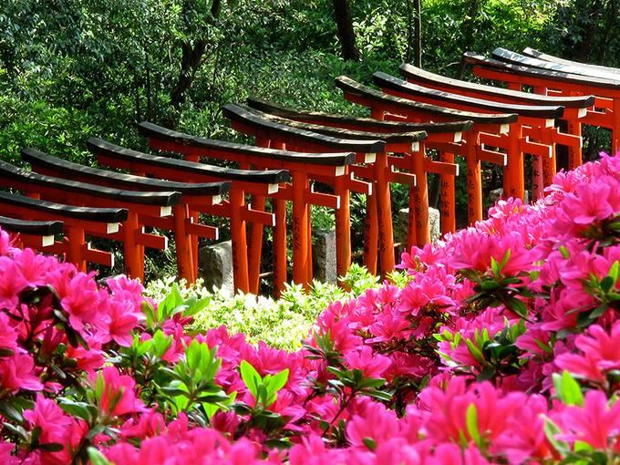 Say lòng mùa hoa đỗ quyên rực rỡ khắp Nhật Bản - Hình 1