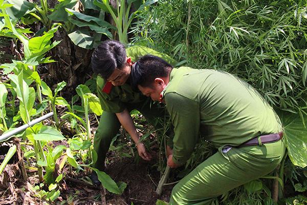 Quảng Ninh: Phát hiện hộ dân trồng cây nghi là cần sa trong vườn nhà - Hình 1