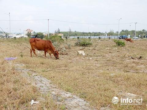 Đà Nẵng: Thừa 14.589 lô đất tái định cư, dân mất đất sản xuất, mất việc - Hình 2