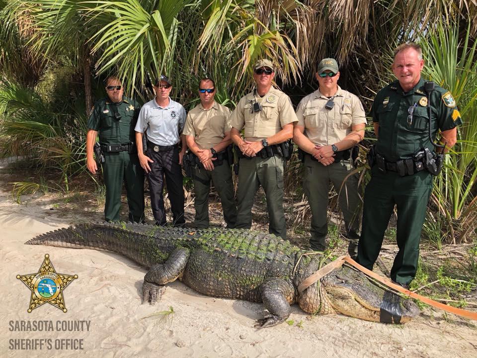 Sốc với cá sấu khổng lồ chưa từng thấy trong công viên Mỹ - Hình 1