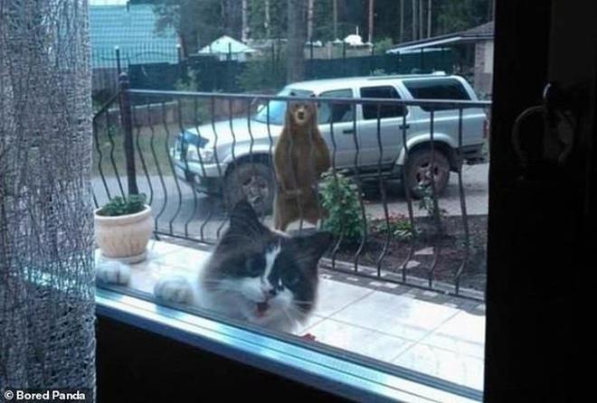 Ảnh: Cười ngất trước những khoảnh khắc siêu hài hước của mèo cưng - Hài hước