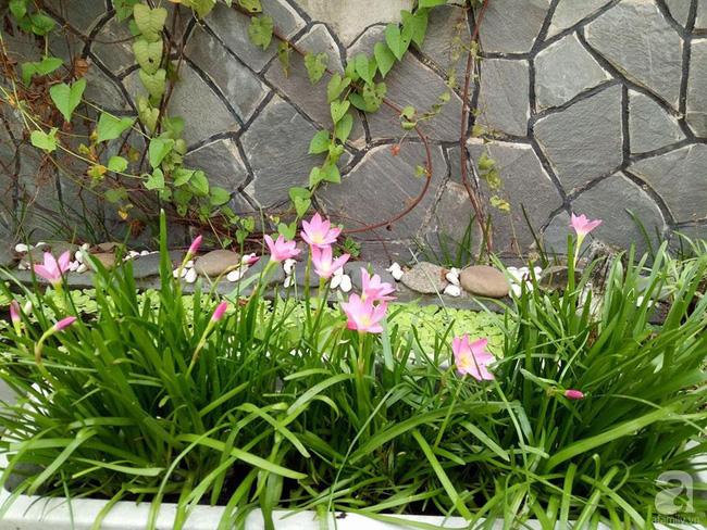 Kinh nghiệm trồng cả vườn cây trái xum xuê như trang trại trên sân thượng của mẹ đảm Biên Hòa - Hình 23