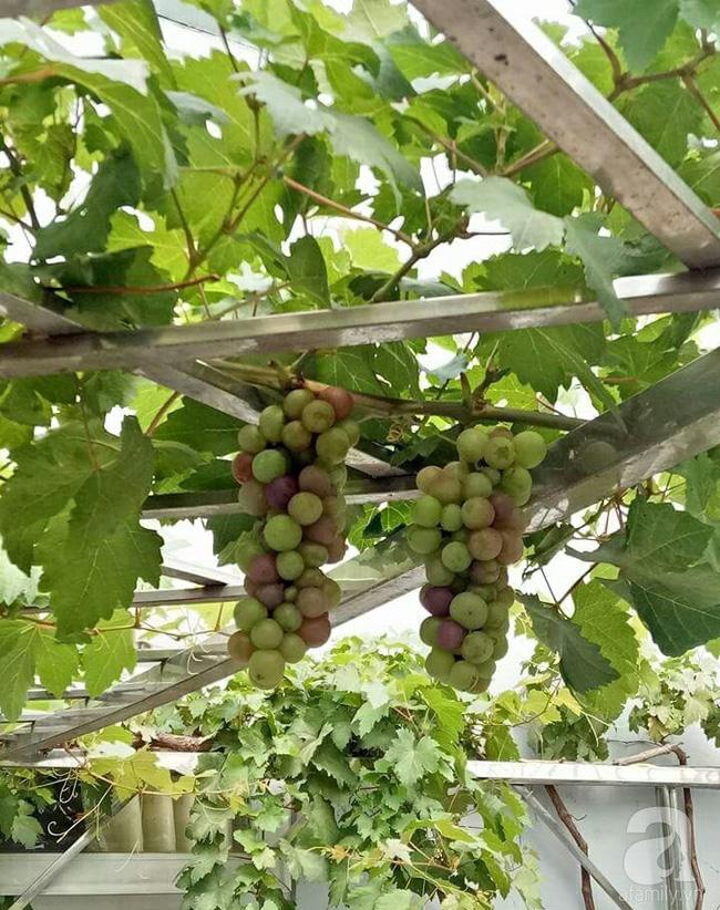 Kinh nghiệm trồng cả vườn cây trái xum xuê như trang trại trên sân thượng của mẹ đảm Biên Hòa - Hình 15