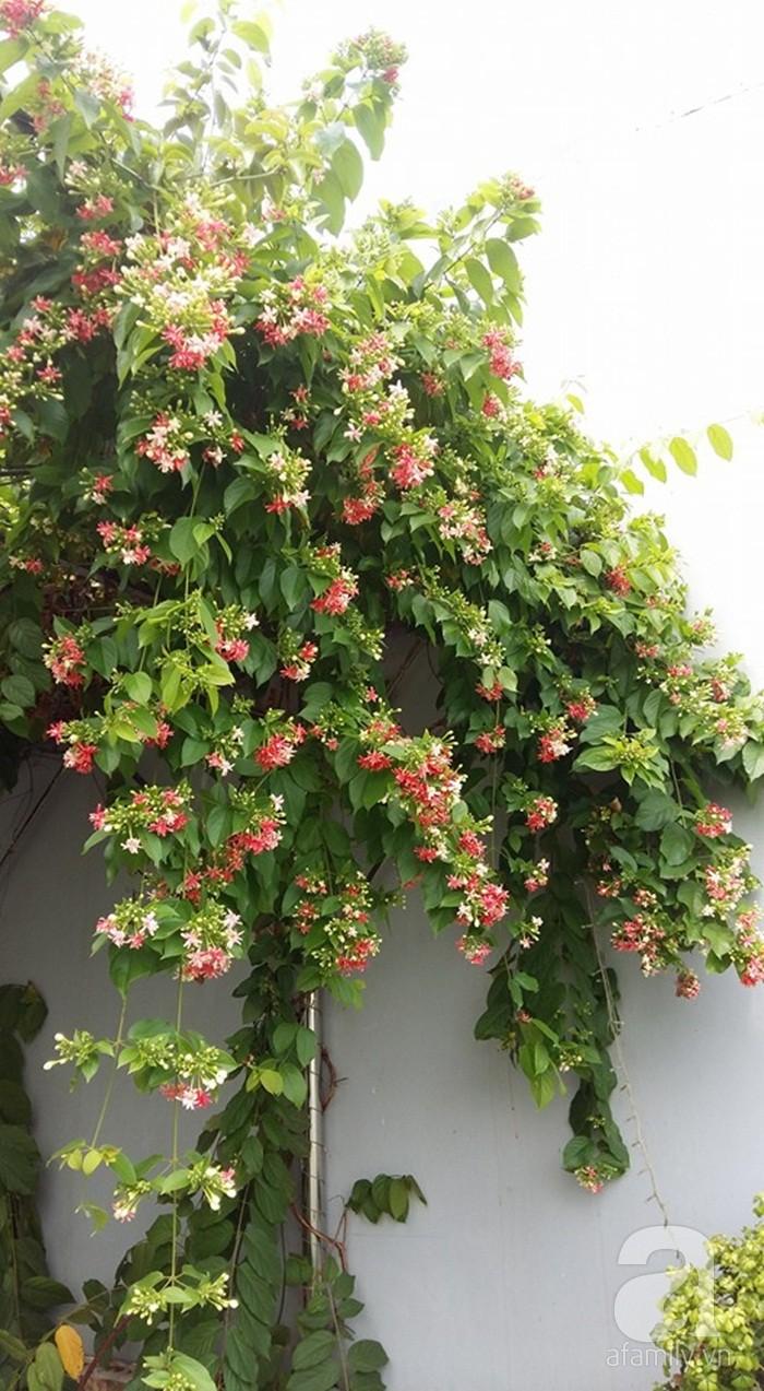 Kinh nghiệm trồng cả vườn cây trái xum xuê như trang trại trên sân thượng của mẹ đảm Biên Hòa - Hình 30