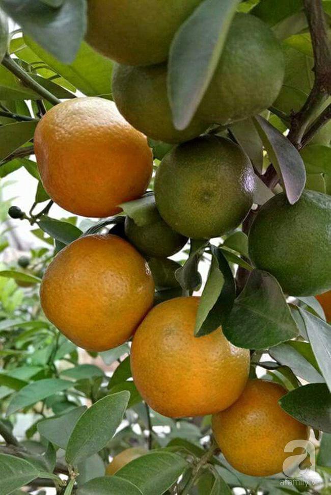 Kinh nghiệm trồng cả vườn cây trái xum xuê như trang trại trên sân thượng của mẹ đảm Biên Hòa - Hình 11