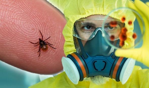7 bệnh do ve gây ra chớ nên coi thường kẻo nguy hại sức khỏe - Hình 1