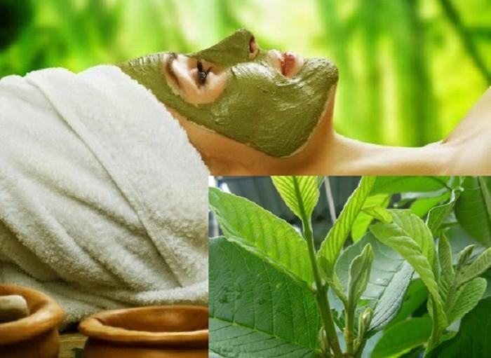 Chăm sóc và làm đẹp da với lá cây - Hình 2