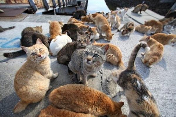 Siêu bão Hagibis tấn công Đảo Mèo Okishima, cộng đồng mạng hết lòng cầu nguyện cho các boss - Hình 2