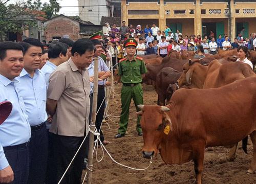 Hà Nội: Phát triển chuỗi chăn nuôi bò thịt chất lượng cao - Hình 1