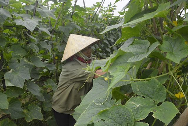 Nghệ An: Mưa sầm sập, rau chết ngập, ao cá tràn bờ, dân thiệt hại - Hình 1