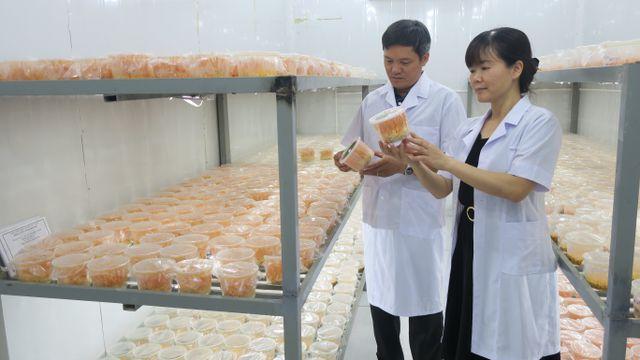 Khám phá công nghệ nuôi trồng loài nấm nửa cây nửa con của các nhà khoa học Việt - Hình 1