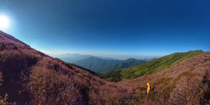 Biển hoa tím cao hơn mây ở Yên Bái - Hình 1
