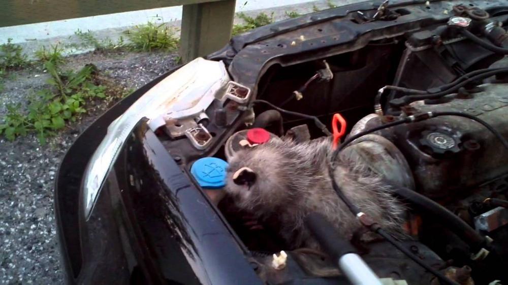 Có nên rửa khoang máy xe ô tô? - Hình 4