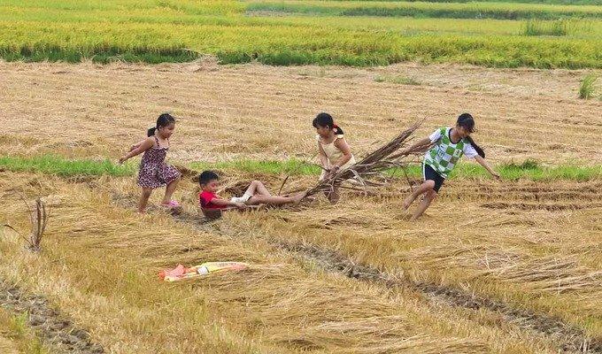 Khung cảnh đồng quê ở Quảng Ngãi - Hình 2