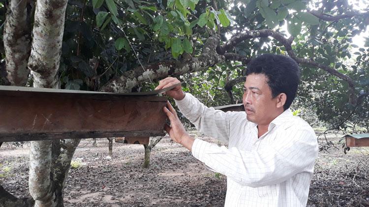 Treo tổ ong Dú trong vườn chôm chôm vắt ra thứ mật đắt tiền - Hình 1