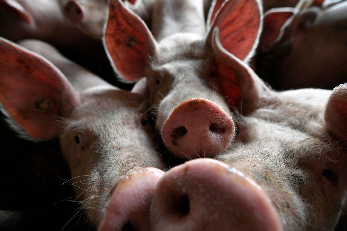 Thiếu thịt lợn, dân Trung Quốc chuyển sang ăn thịt chó, giá lại siêu rẻ - Hình 1
