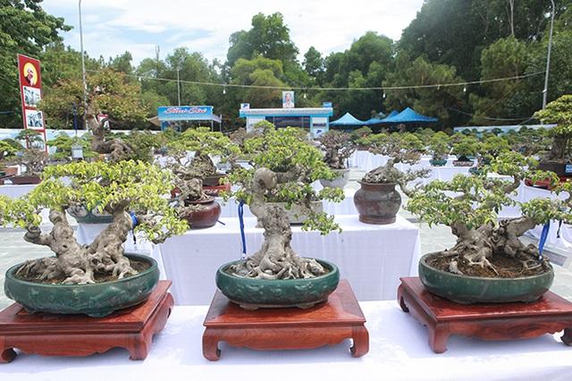 Người Việt nô nức mang sanh bonsai giá cả trăm triệu đi triển lãm - Hình 1