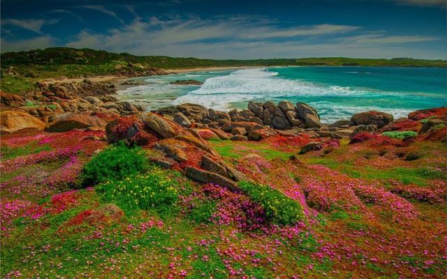 Mùa xuân đẹp như tranh vẽ ở phía bên kia trái đất - Hình 1