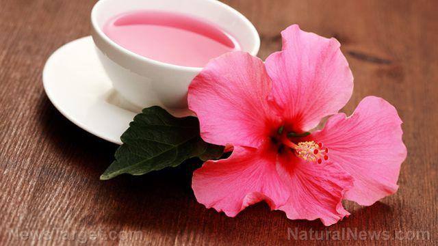 Phát hiện mới về khả năng chữa ung thư vú của hoa dâm bụt - Hình 1