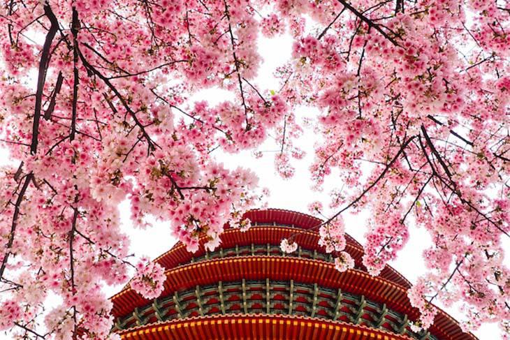 Đừng bỏ lỡ những loài hoa gõ cửa mùa đông Nhật - Hàn - Đài - Hình 1