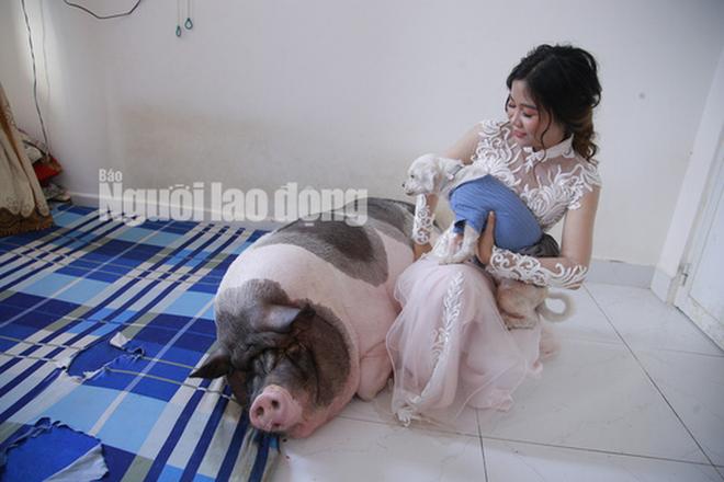 Chuyện lạ: Trước khi về nhà chồng, cô dâu chăm chú heo nặng 160kg trong phòng - Hình 2