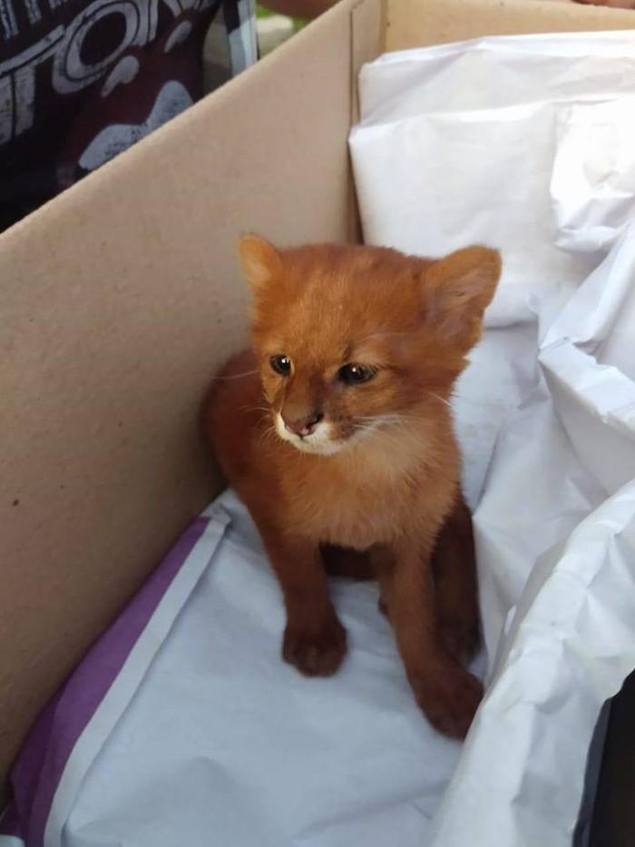 Tưởng nhặt được mèo con, sửng sốt phát hiện sinh vật quý hiếm - Hình 2