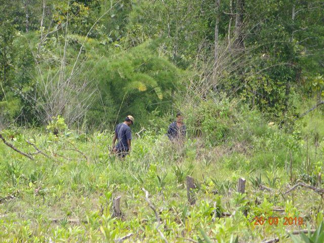 Khởi tố trưởng ban quản lý rừng phòng hộ vì để mất rừng - Hình 1