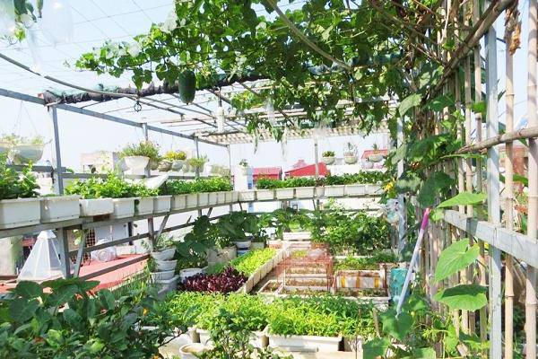 Bà mẹ Hà thành chi mạnh tay thiết kế 100 chậu rau trên sân thượng - Hình 1