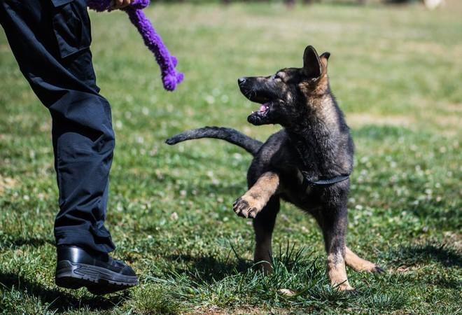 6 chú chó nhân bản vô tính gia nhập lực lượng cảnh sát Bắc Kinh - Hình 1