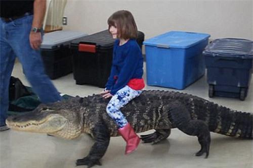 Hãi hùng trò chơi nguy hiểm nhất thế giới: Bé gái cưỡi cá sấu trong ngày sinh nhật - Hình 2