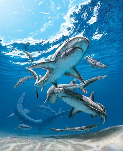 Khủng long tuyệt chủng buộc cá mập phải tiến hóa nhỏ lại? - Hình 2