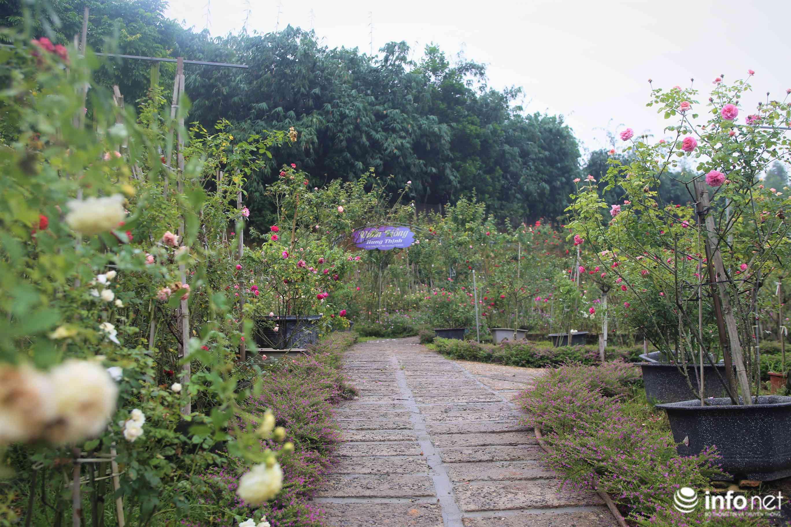 Chàng thanh niên 30 tuổi trồng trại hoa hồng thu hàng trăm triệu mỗi năm - Hình 1