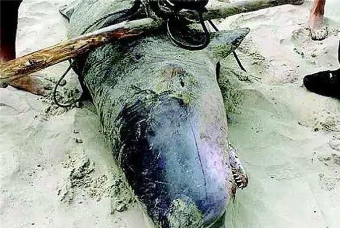 Bắt được cá mú khổng lồ dài gần 2m - Hình 8