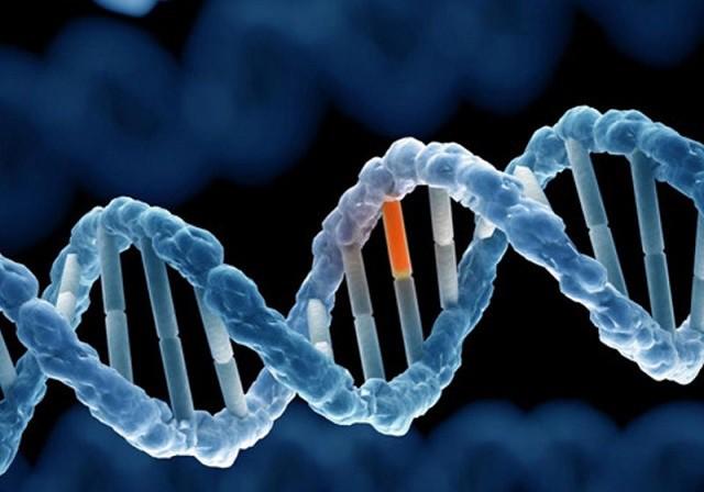 Gen sinh ung thư mới được phát hiện - Hình 1