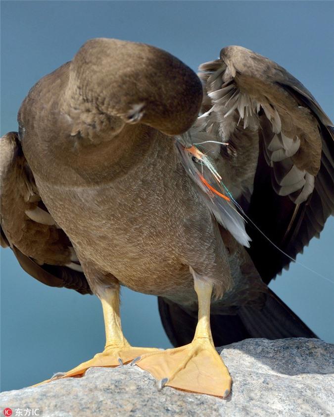 Hãi hùng với sự thực sau khuôn mặt đẫm máu của chim điên - Hình 4