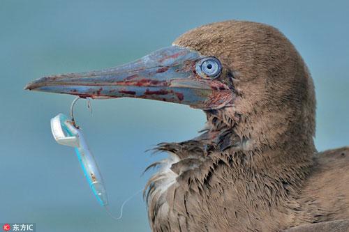 Hãi hùng với sự thực sau khuôn mặt đẫm máu của chim điên - Hình 1