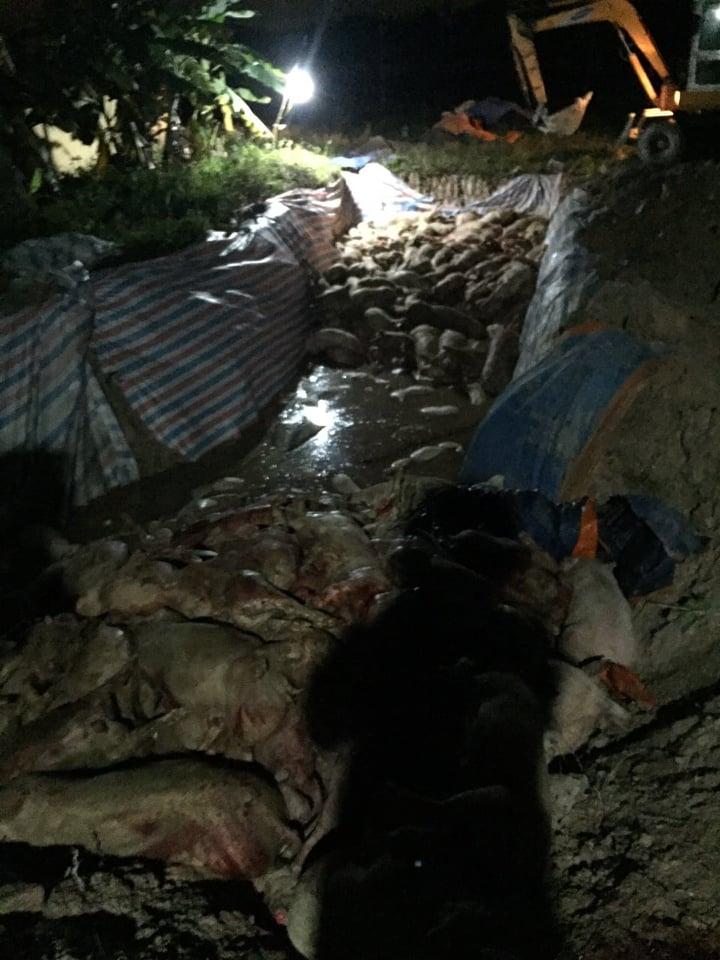 Hải Phòng: Sự thực hộ không nuôi lợn nhận 700 triệu đồng hỗ trợ - Hình 2