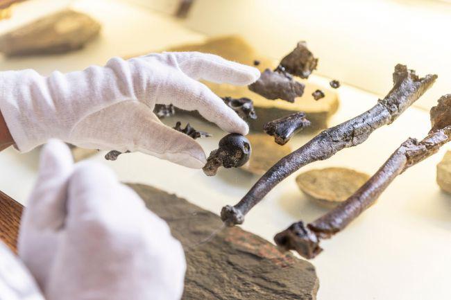 Kinh ngạc hài cốt sinh vật lạ có chân người và cánh tay vượn - Hình 2
