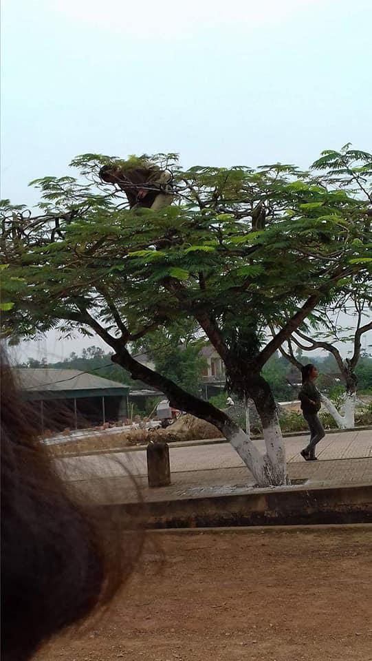 Chất chơi như thầy giáo trường người ta, leo hẳn lên cây để chụp ảnh cho học sinh, dân mạng hài hước ví von: Superman giữa đời thực - Hình 2