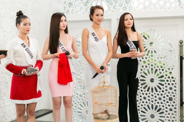 Hoa hậu Hoàn vũ VN: Thúy Vân dẫn đầu, cô gái Việt kiều khiến giám khảo đơ người khi nói... tiếng Nga - Hình 2