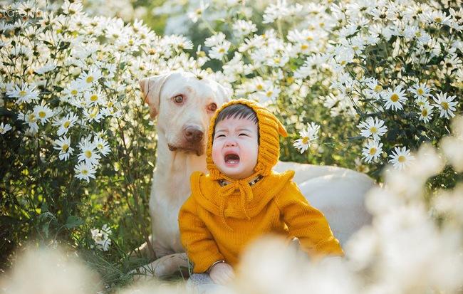 Đốn tim với bộ ảnh 50 sắc thái cảm xúc của bé gái bên vườn cúc họa mi - Hình 1