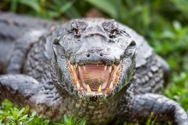 Indonesia: Ngư dân bị cá sấu lôi xuống sông, đến lúc tìm thấy chỉ còn nửa người - Hình 1